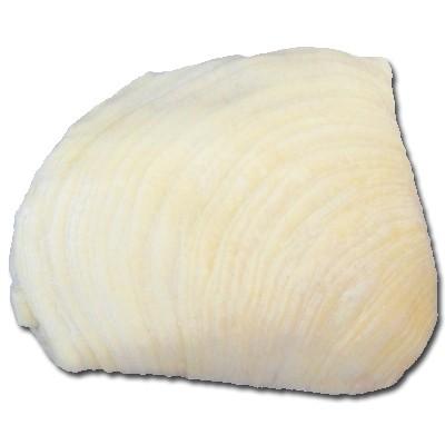 aragoste